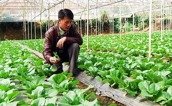 Hình thức vay thế chấp đất nông nghiệp được hiểu như thế nào?